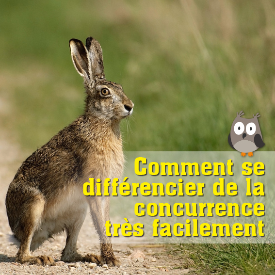 Comment se differencier de la concurrence