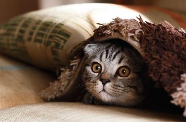 image d'un chat un peu effrayé c'est l'état d'une personne qui débute sur Instagram